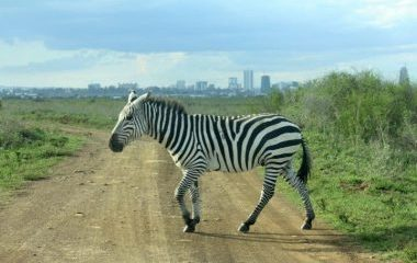 city, zebra, national park, Kenya