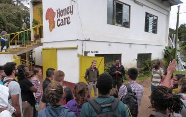 Honey Care, Social Enterprise, Kenya